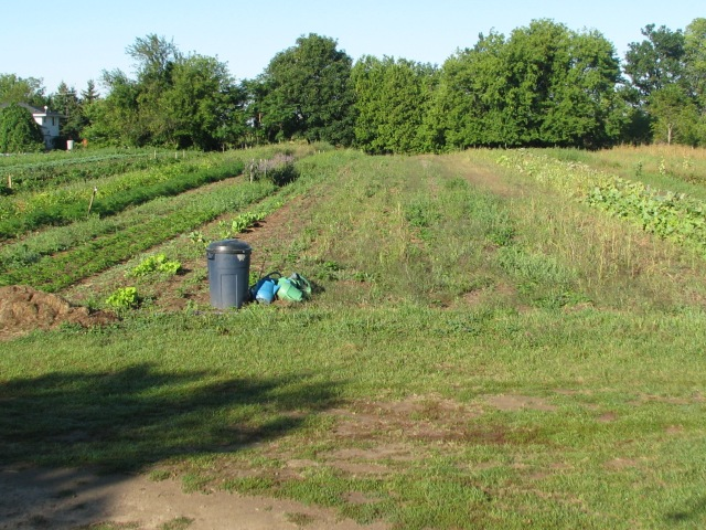 The usual garden view, Sept. 14, the right side in the photo being nearly all fallow now.