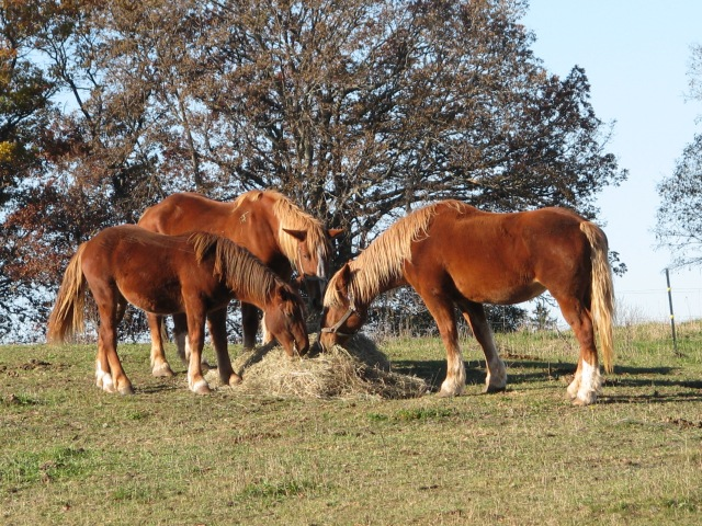 A sunny warm morning, no wind, lots of real nice hay. Sometimes life is very good.