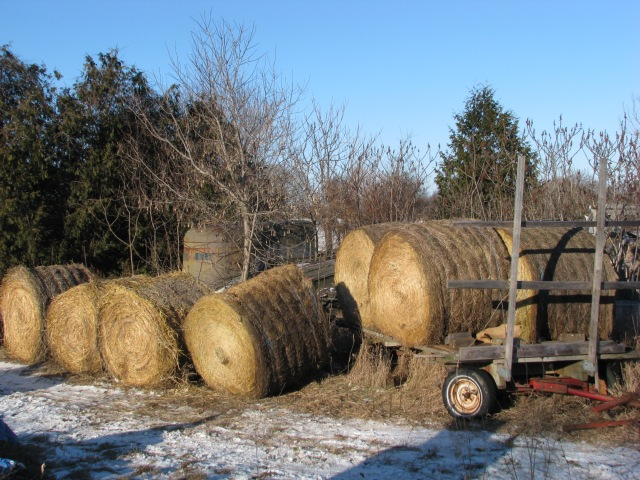 Four of the 4 x 5 hay bales on the parked wagon with another four on the ground.