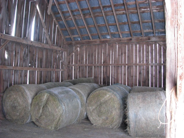 A look at the same east bay of the barn after we had rolled in 10 of the 4X5 foot round bales. We'll get more tomorrow, Tuesday, morning but already we now have hay for more than 30 days