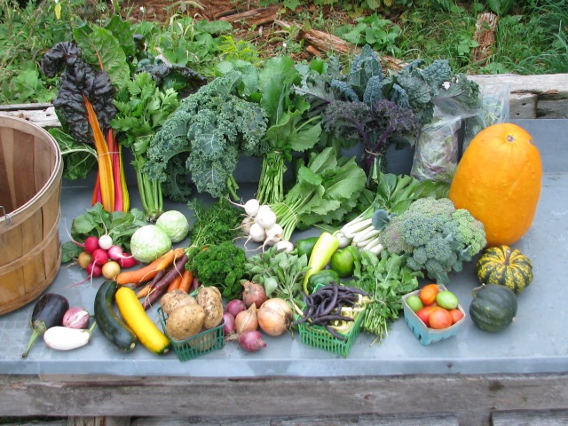 A typical small share of veggies on a particularly bountiful week in September of 2014