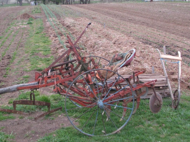 The single row horse drawn cultivator with beds of garlic behind it.