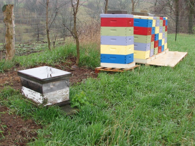 Bee hives.  Ours is the beat up one in the near ground, a strong hive though and Kari' new colourful lot .