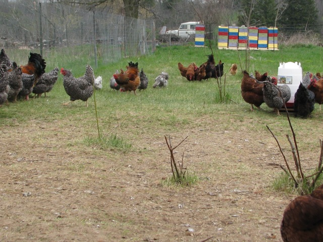 Chickens, bees and Land Rover
