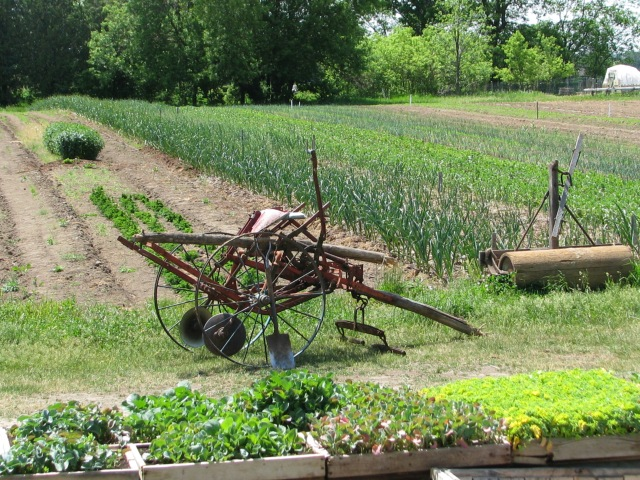From a different angle looking across the garden with the single row cultivator with it's recently broken pole at the garden's edge,
