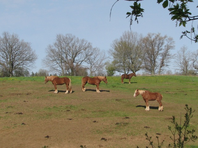 Four horses on a sleepy Mother's Day morning