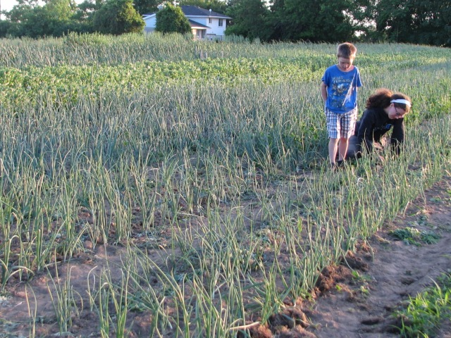 William and his Aunt Angela weeding the onions, though William appears to have gone for the supervisory role.