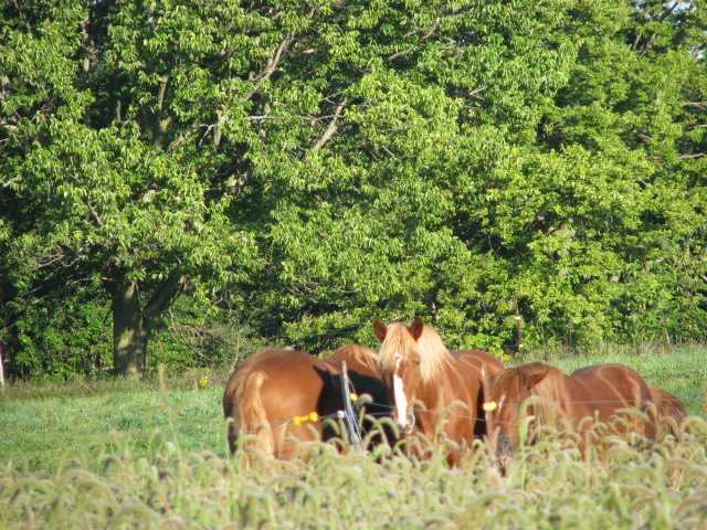 Snoozing horses soaking up sun on a cool Monday morning
