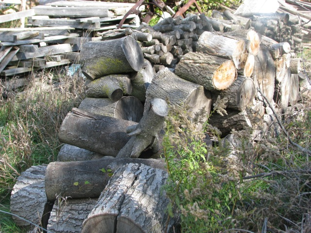 Firewood waiting to be split and moved to the woodshed to be stacked.