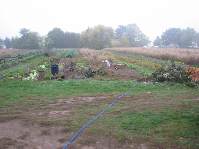 On a misty Monday the usual Monday morning view of the garden. Looking very fall like.
