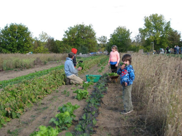 Aerron harvesting greens with his helpers Lauren, William and maybe Devon. Photo by Briar Simon
