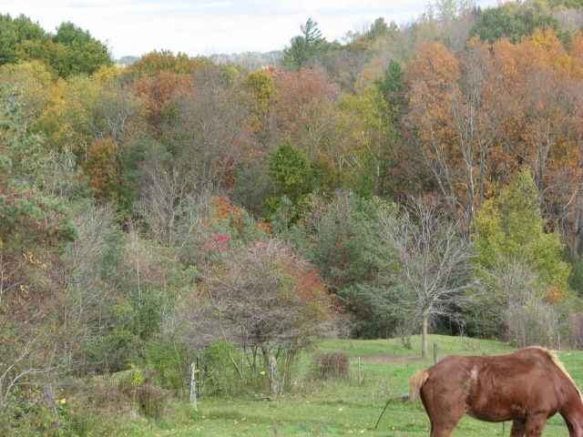A lot of leaves have come off the trees during the last three days. That's Marie horse at the bottom of the photo.