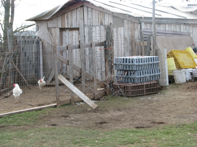 The chicken house with the door only open enough to let a chicken through.